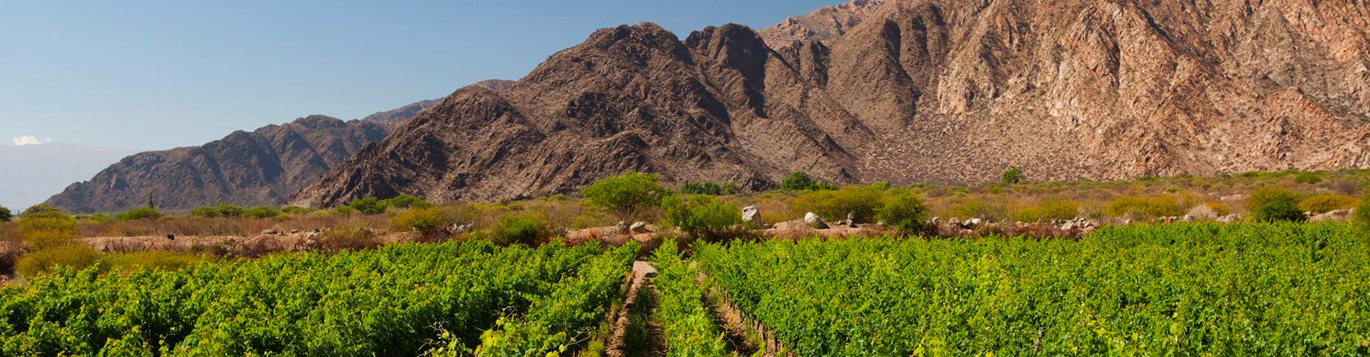 Amalaya Vineyards in Salta