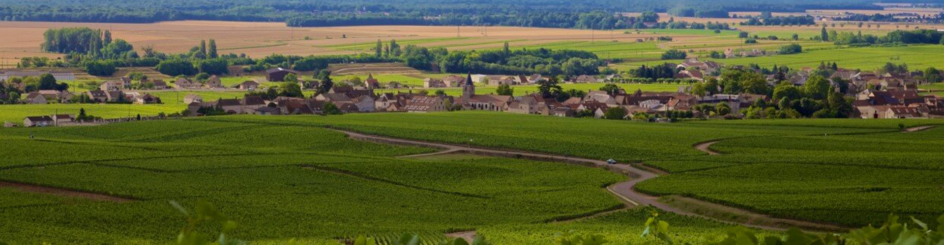 Domaine Tollot-Beaut Vineyards in Chorey-lès-Beaune