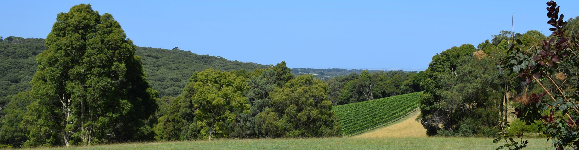 Ocean Eight Vineyards Mornington Peninsula