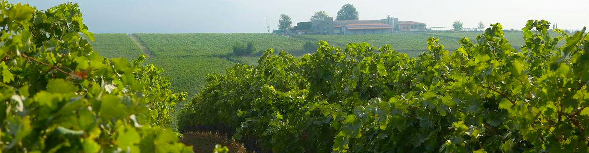 Ktima Gerovassiliou Vineyards in Epanomi, Greece