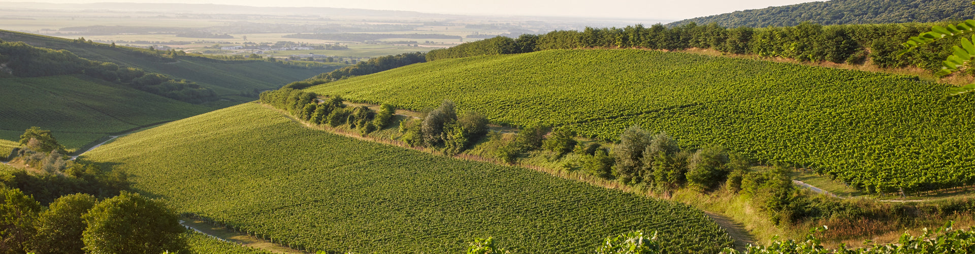Sauska Vineyards in Tokaj, Hungary