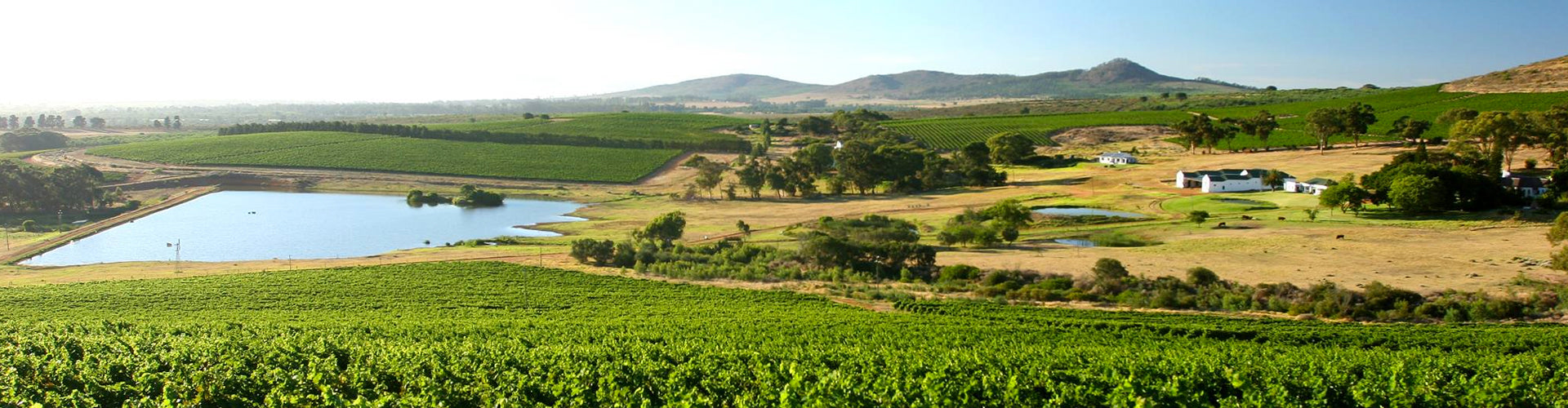 Cloof Wine Estate and Vineyards in Darling, South Africa