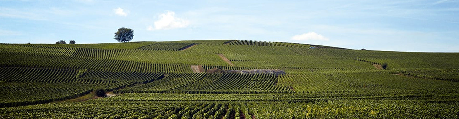 Champagne Piper-Heidsieck Vineyards near Reims