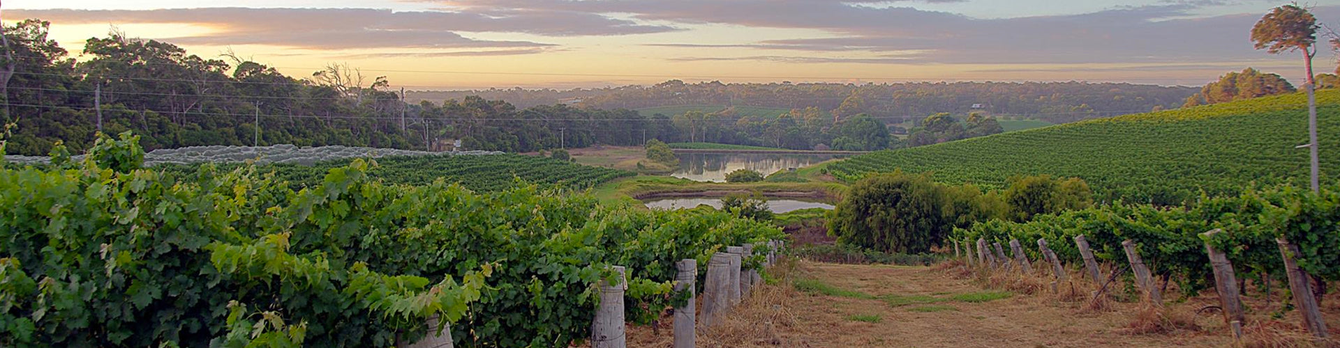 Woodland's Vineyards in Margaret River, Western Australia