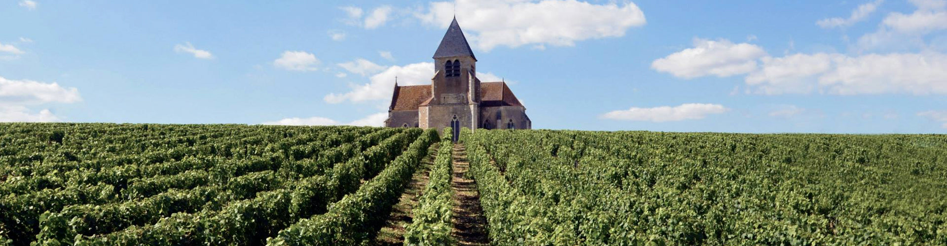Jean-Marc Brocard Vineyards with Vézelay Abbey in Background