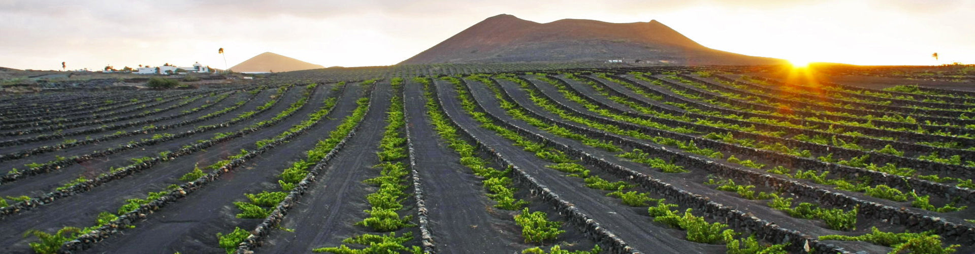 Bodegas El Grifo Vineyards in Lanzarote, Spain