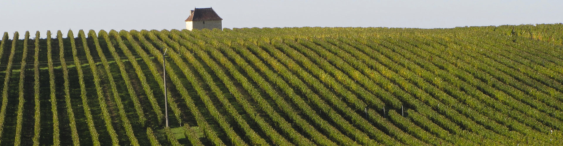 Vineyards in Entre Deux Mers, Bordeaux