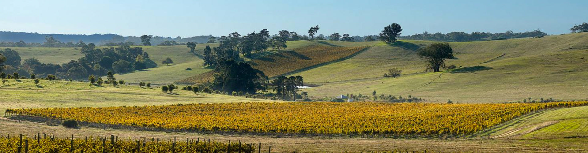 Grosset Vineyards in the Clare Valley, South Australia