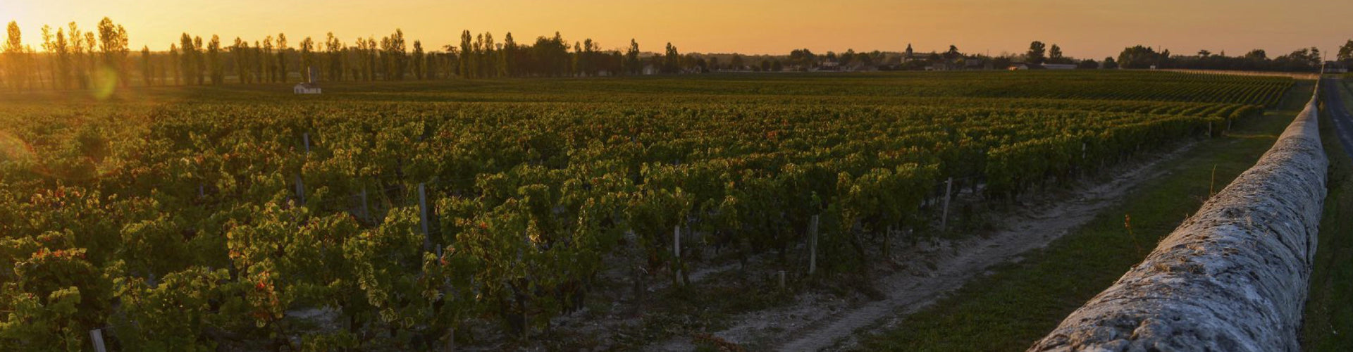 Vineyards in the Margaux appellation of Bordeaux