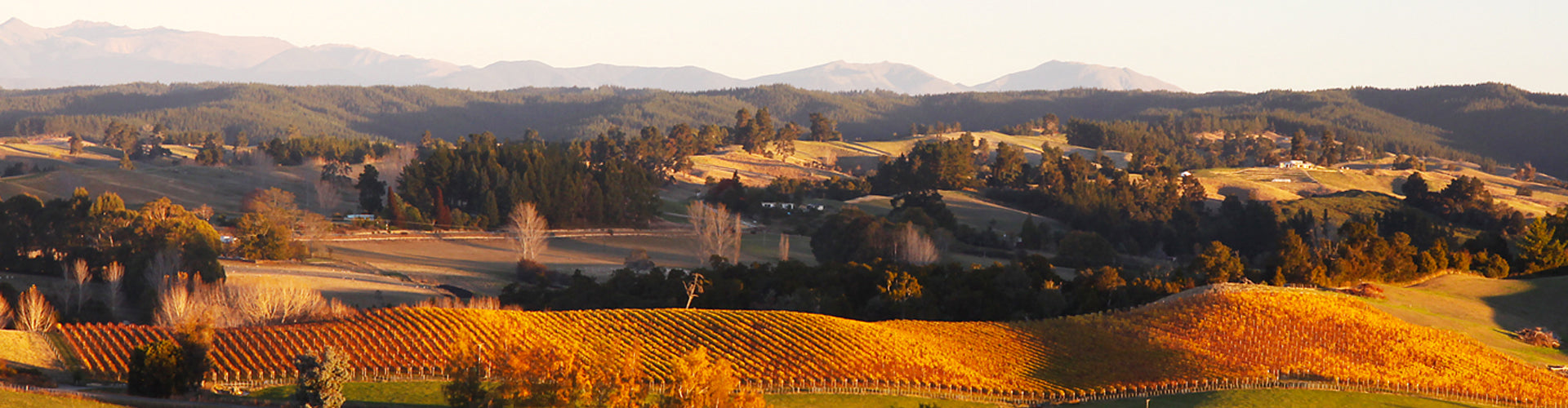 View over Neudorf Vineyards in Nelson, New Zealand
