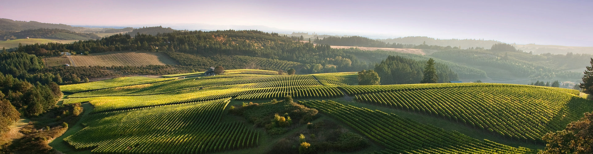 Shea Vineyards in Oregon, Pacific Northwest of America