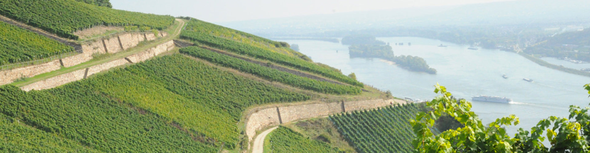 The Rheingau Wine Region of Germany