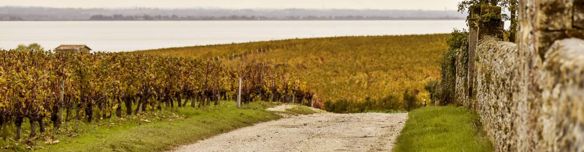Vineyards in the Saint Estèphe Wine Region of Bordeaux