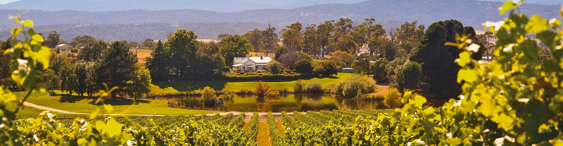The Tamar Valley Wine Region of Tasmania