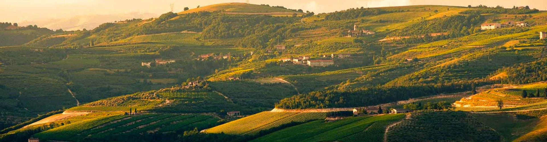 View of Valpolicella Vineyards in North East Italy