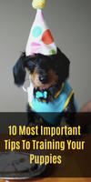 10 Most Important Tips To Training Your Puppies