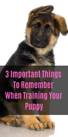 3 Important Things To Remember When Training Your Puppy