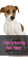 7 Tips to Naming Your Puppy