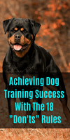 Achieving Dog Training Success With The 18