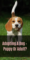Adopting A Dog – Puppy Or Adult?