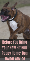 Before You Bring Your New Pit Bull Puppy Home: Dog Owner Advice