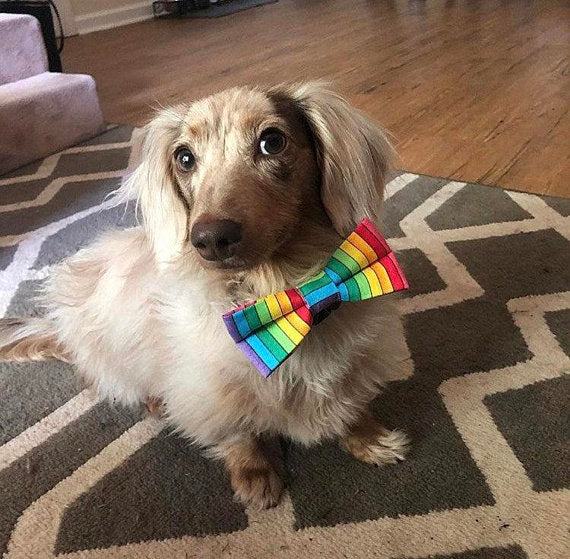 Rainbow Dog Bow Tie Slips on Collar