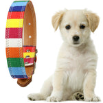Rainbow Dog Leash Small Puppy Plain collar