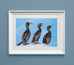 Trio Of Shags - Goosemoose Paint
