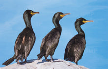 Load image into Gallery viewer, Trio Of Shags - Goosemoose Paint