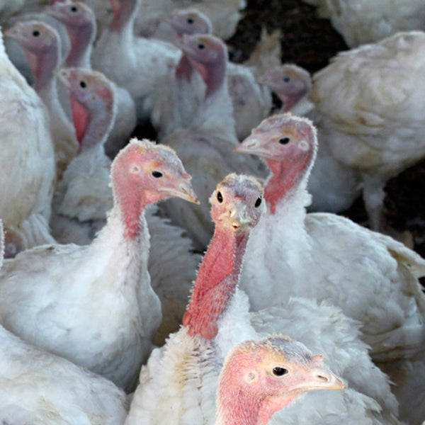 Naturally-Raised Turkey $3.29/lb