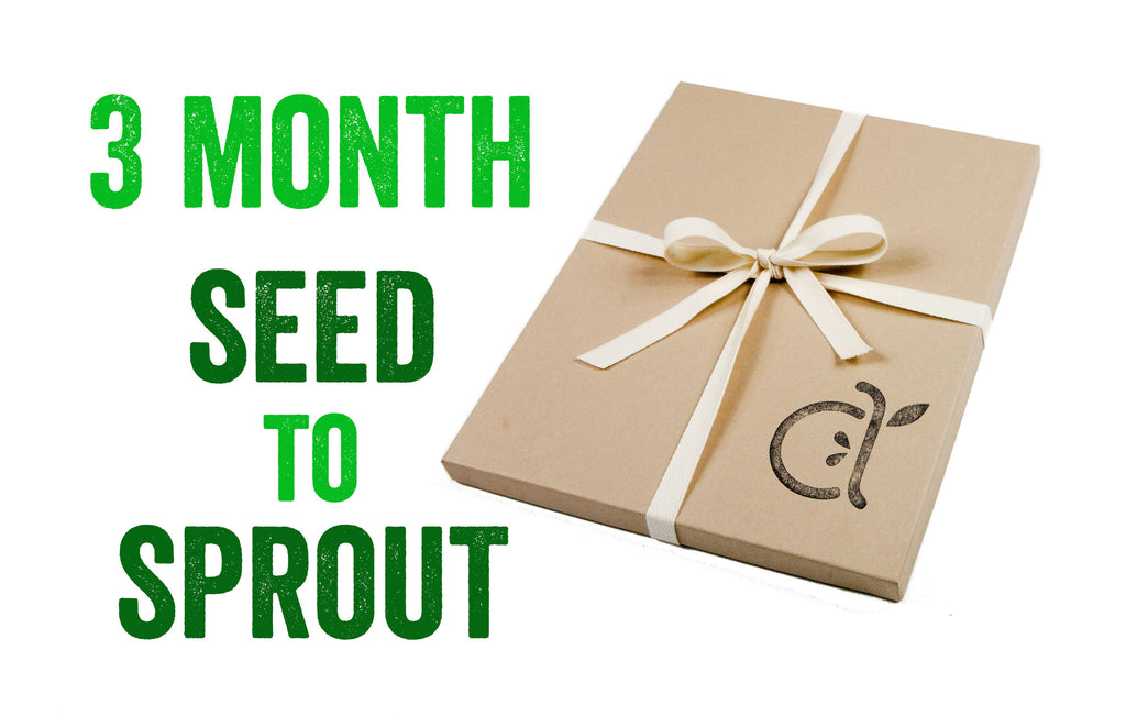 3-Month Seed to Sprout Package
