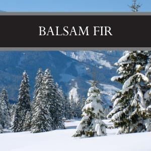 Balsam Fir Lotion