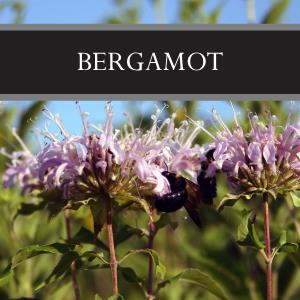 Bergamot 3-Pack Bar Soap