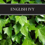 English Ivy Wax Tart