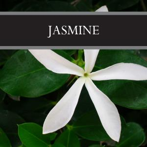 Jasmine 3-Pack Bar Soap