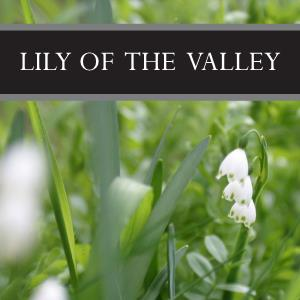 Lily of the Valley Wax Tart