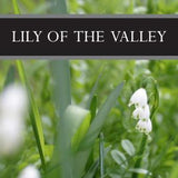 Lily of the Valley 3-Pack Bar Soap