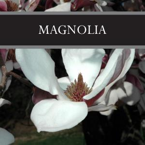 Magnolia 3-Pack Bar Soap