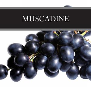 Muscadine 3-Pack Bar Soap