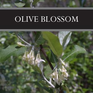 Olive Blossom Candle