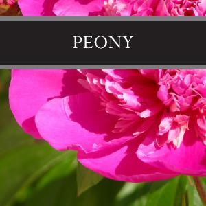 Peony 3-Pack Bar Soap