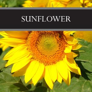 Sunflower Reed Diffuser