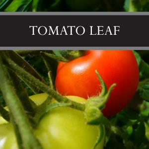 Tomato Leaf Lotion