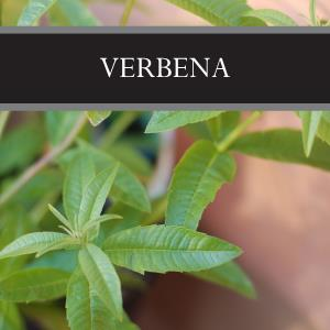 Verbena 3-Pack Bar Soap