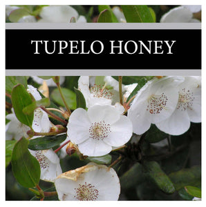 Tupelo Honey Lotion