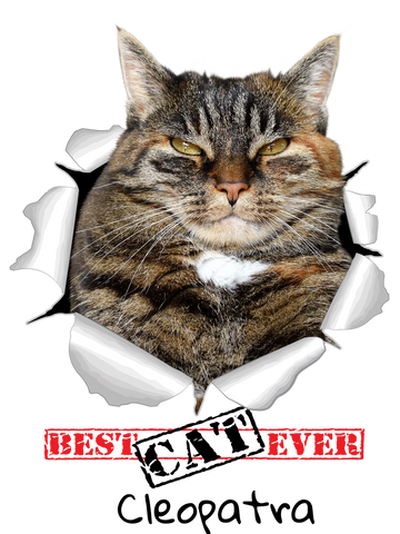 pet-on-shirt - Best CAT Ever! - Pet On Shirt - Pet Designs