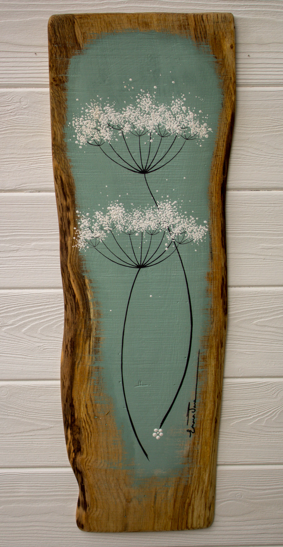 Large Cow Parsley Fine Flower head Soft Turquoise Green Live Edge Wood
