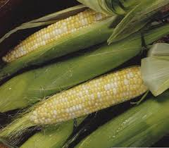 CORN - SWEETNESS BI-COLOR