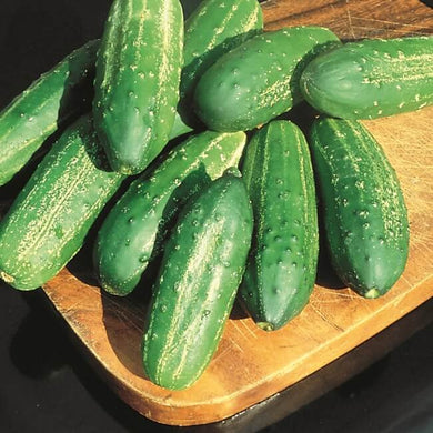 CUCUMBER - REGAL (PICKLING)