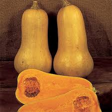 SQUASH - EARLY BUTTERNUT